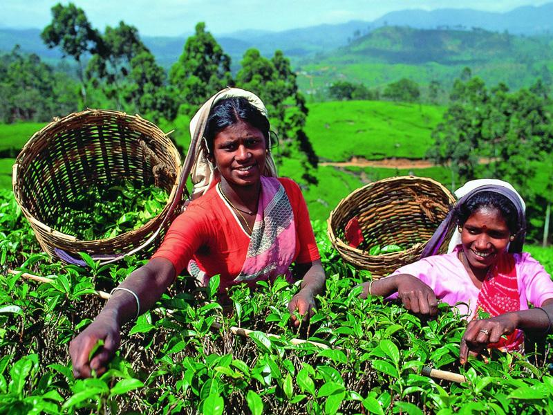 женщина на сборе чая